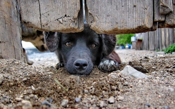 The dog digs holes in the yard