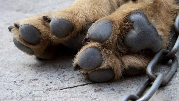 The dog has cold paws, what to do