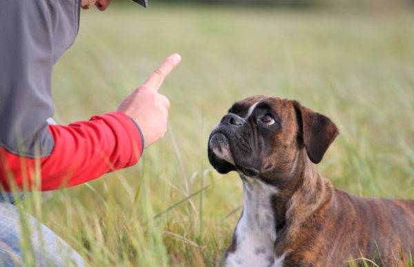 How to stop your dog from eating feces