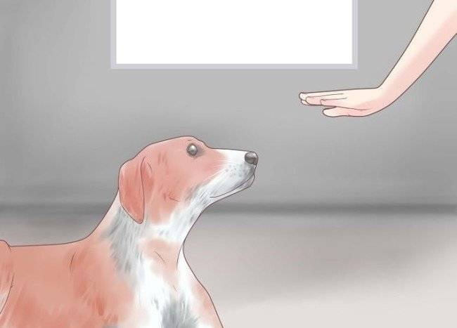 how to wean a dog to howl