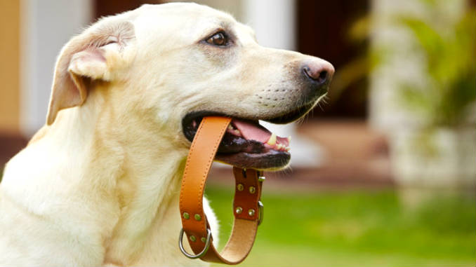 how to choose a collar