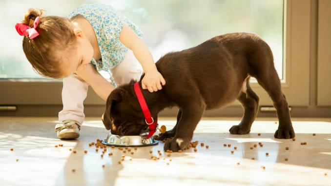 what and how to feed the puppy