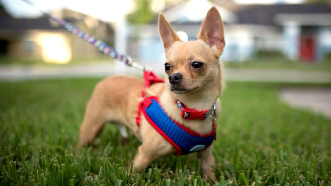 how to choose a harness for a dog photo