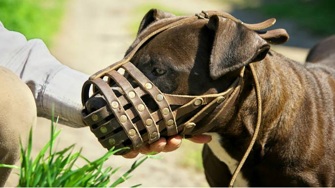 Muzzle for a dog photo